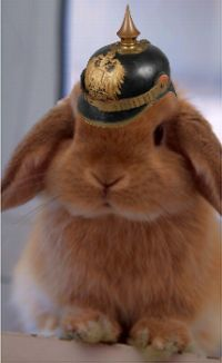 miniature_lop_razza_duchino_con_pickelhaube_200w