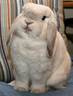 bunnylip