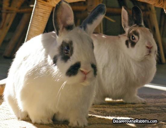 Killer-bunny
