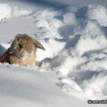 bunny_snow