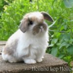 cutest-baby-rabbit-picture