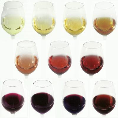 scan colori vino montaggio