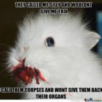 Coniglietto Affamato