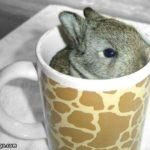 Cup_Cute_Bunny