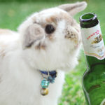 Blogging_bunny_beer