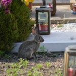 coniglio-cimitero