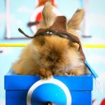 bunny-pilot-01-800