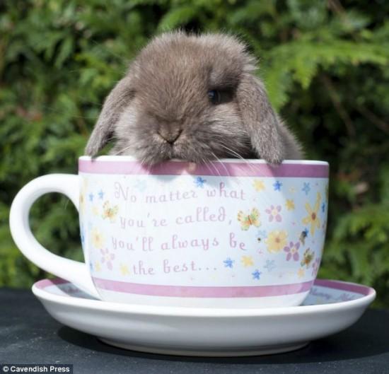 Col coniglio meglio non superare i 40 °C.