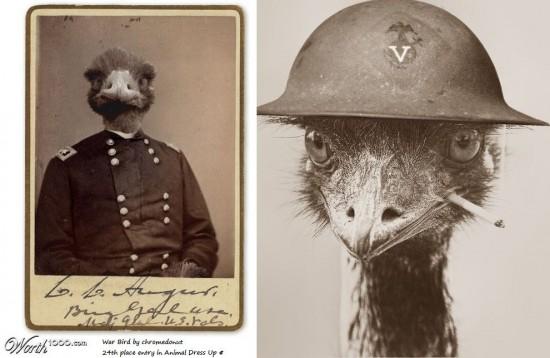 Raffigurazione piuttosto accurata di un comandante e di un soldato Emù.