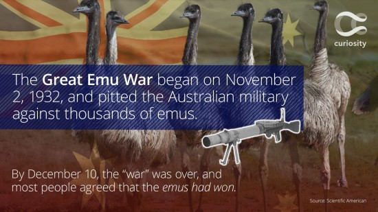redeye-australias-great-emu-war-20151125